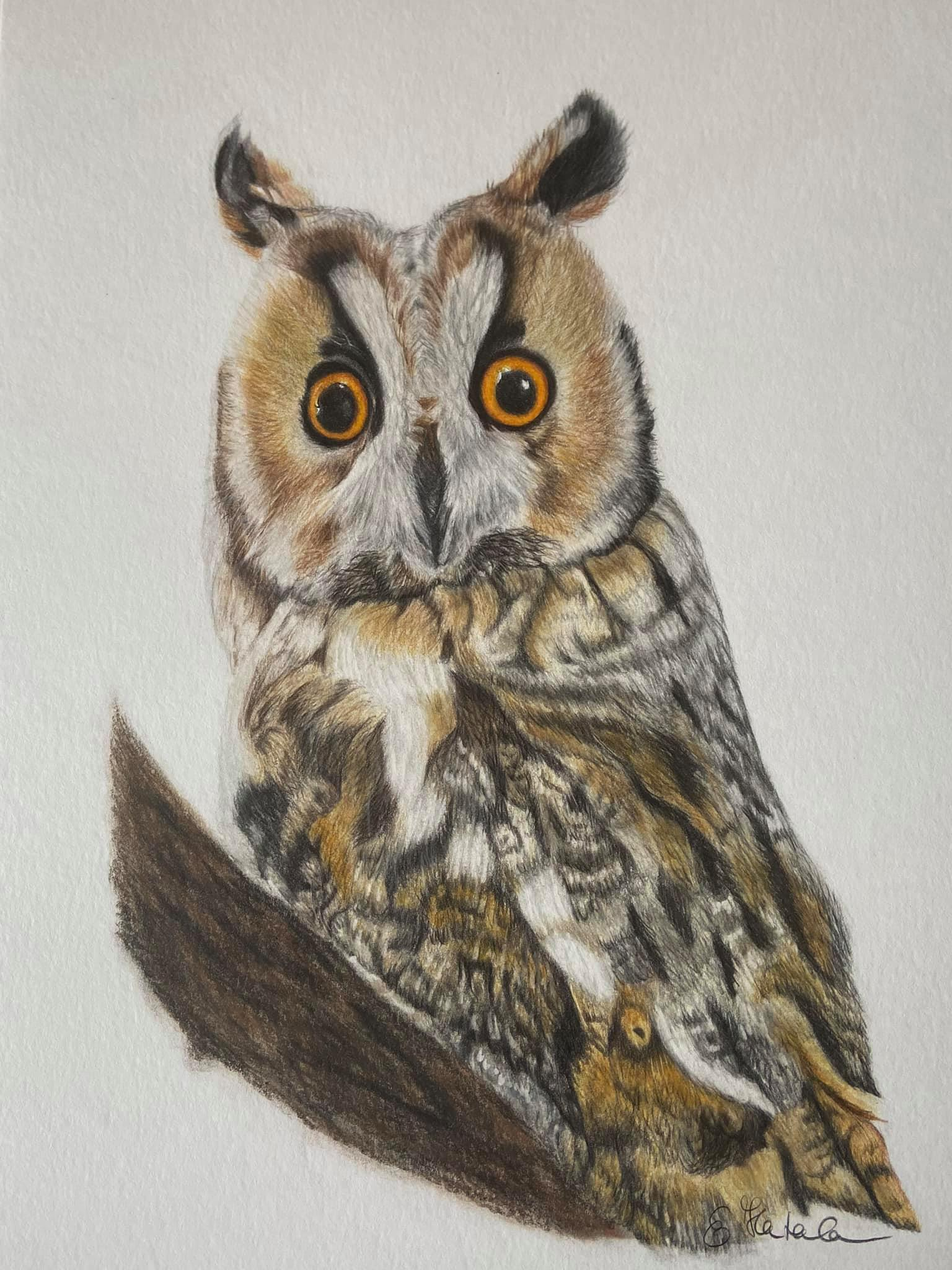 Owl colour pencil portrait Image