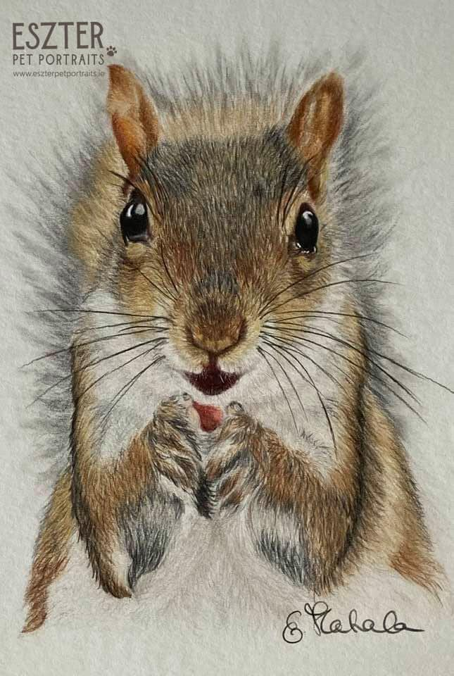 Squirrel colour pencil portrait Image