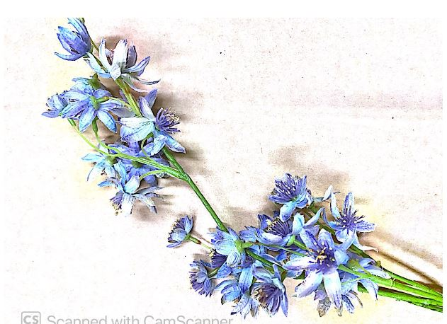 Light Blue Flowers with Foliage Artificial Image