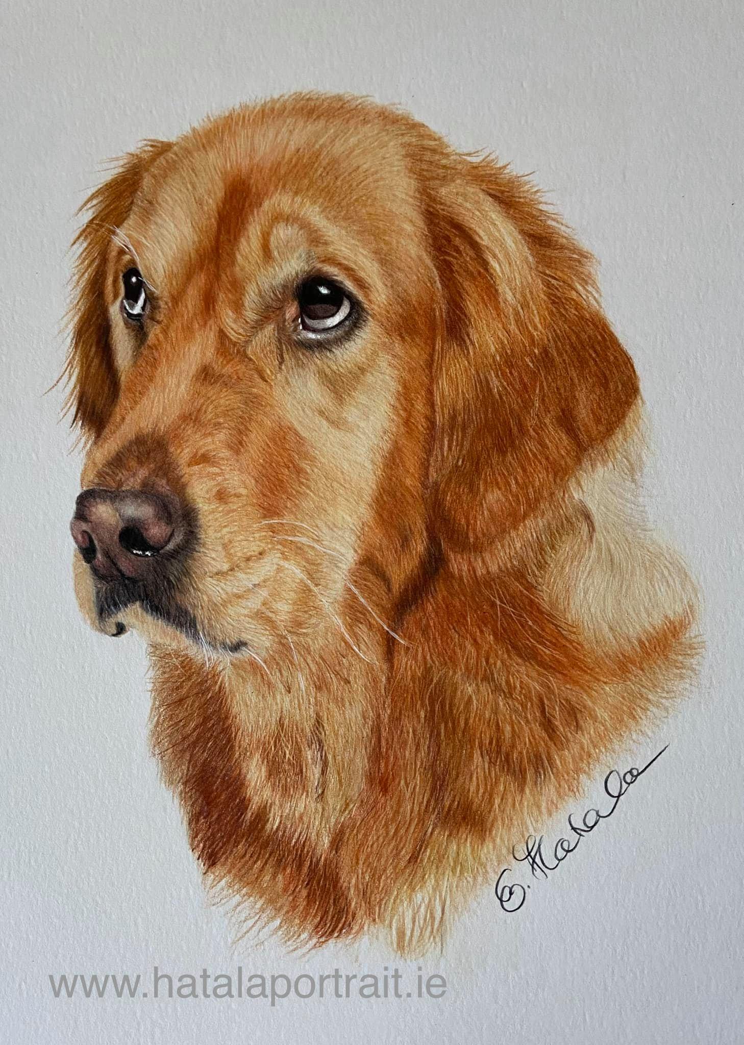 Pet portrait from photo Image